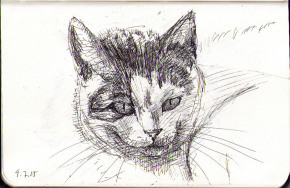 thomas-dalsgaard-clausen-2015-07-09a-drawing-of-a-cat-in-ballpoint-pen.jpg